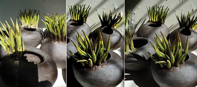 Descrizione e scheda tecnica di vasi moderni in ceramica dalle forme che richiamano la natura.