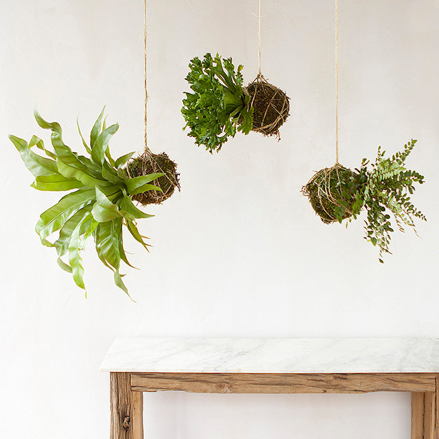 Piante appese: string gardens