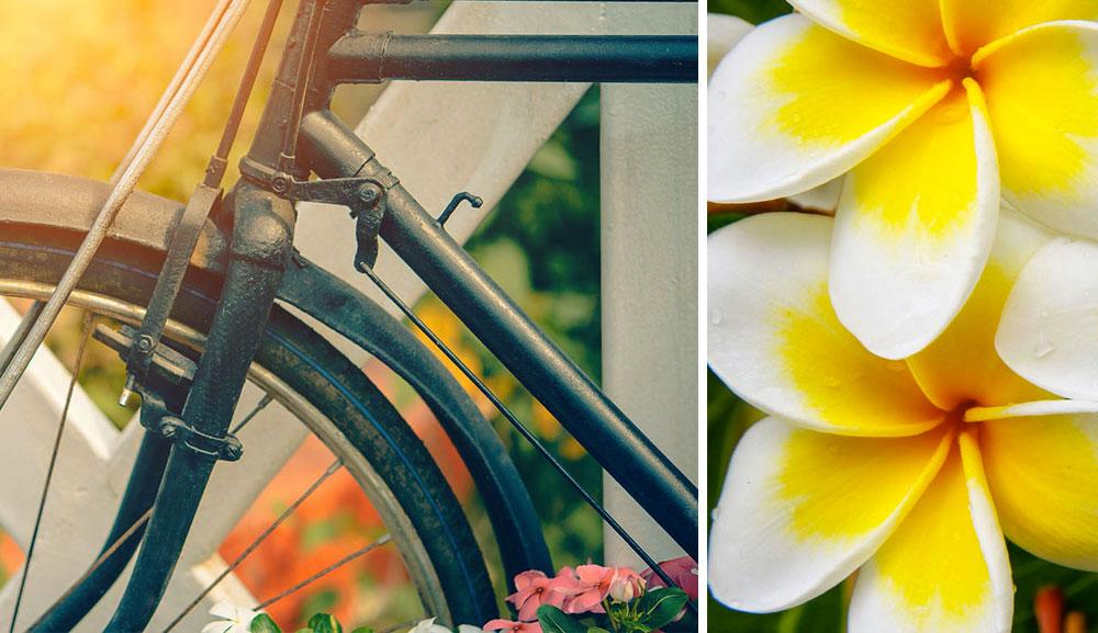 Bicicletta e fiori estivi.