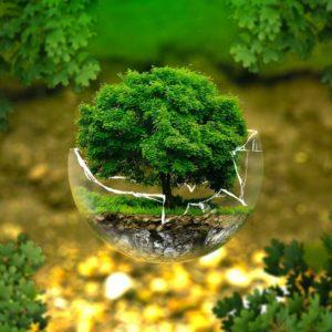 Un albero come simbolo di sostenitbilità