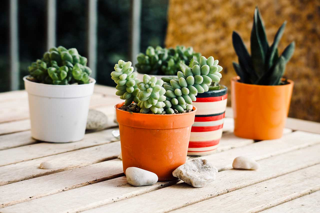 piante grasse esterno con vaso colorato