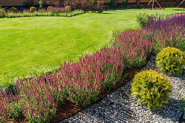 piante per giardino